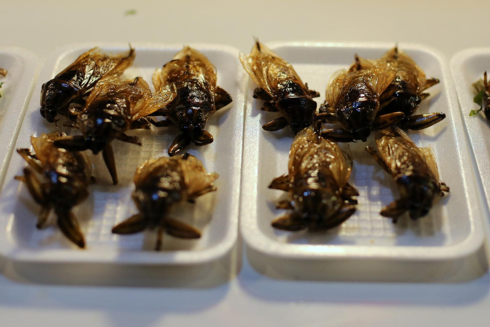 Tasty morsels at Chiang Rai night market