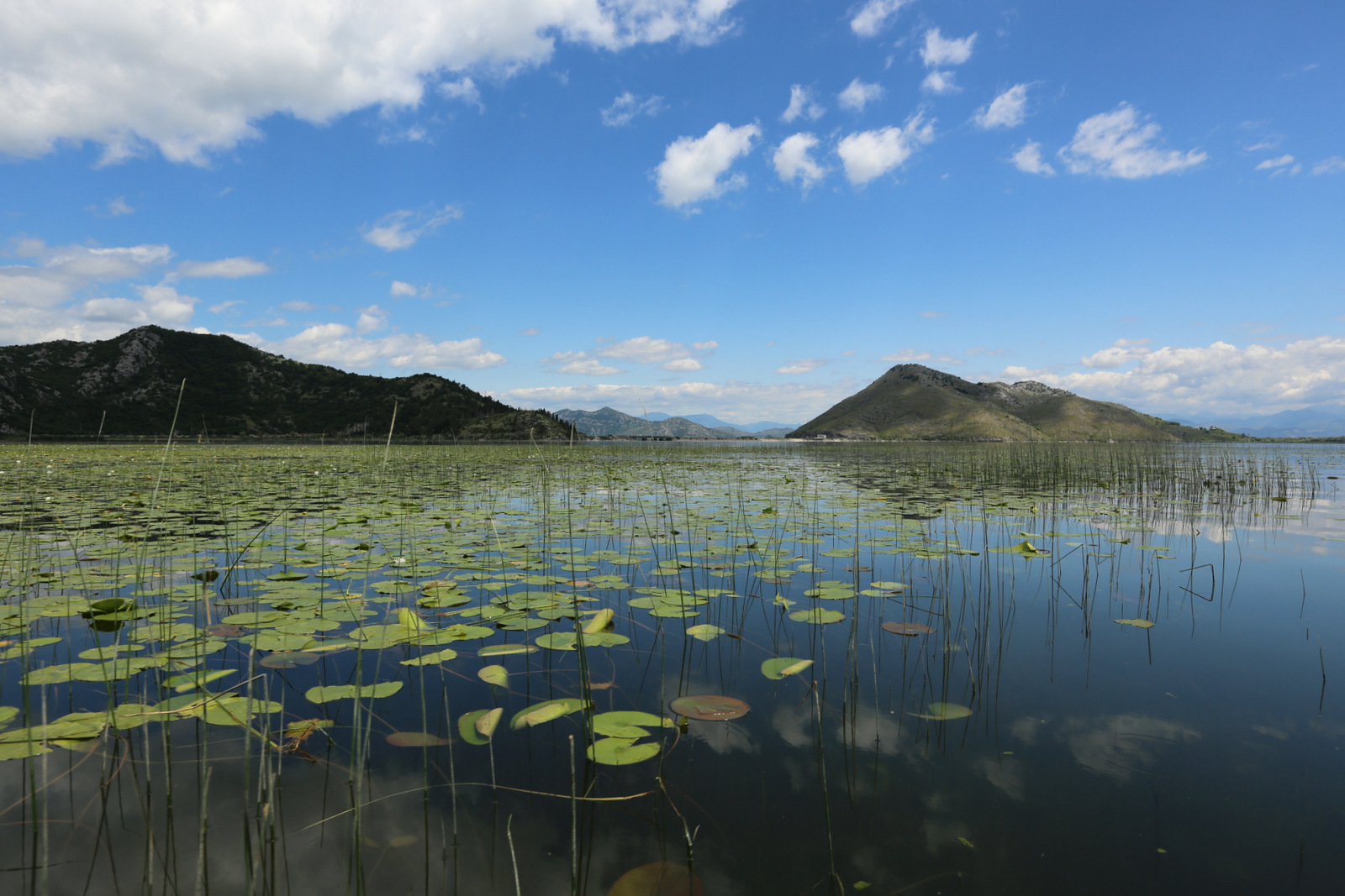 Boat tour on Skadar lake