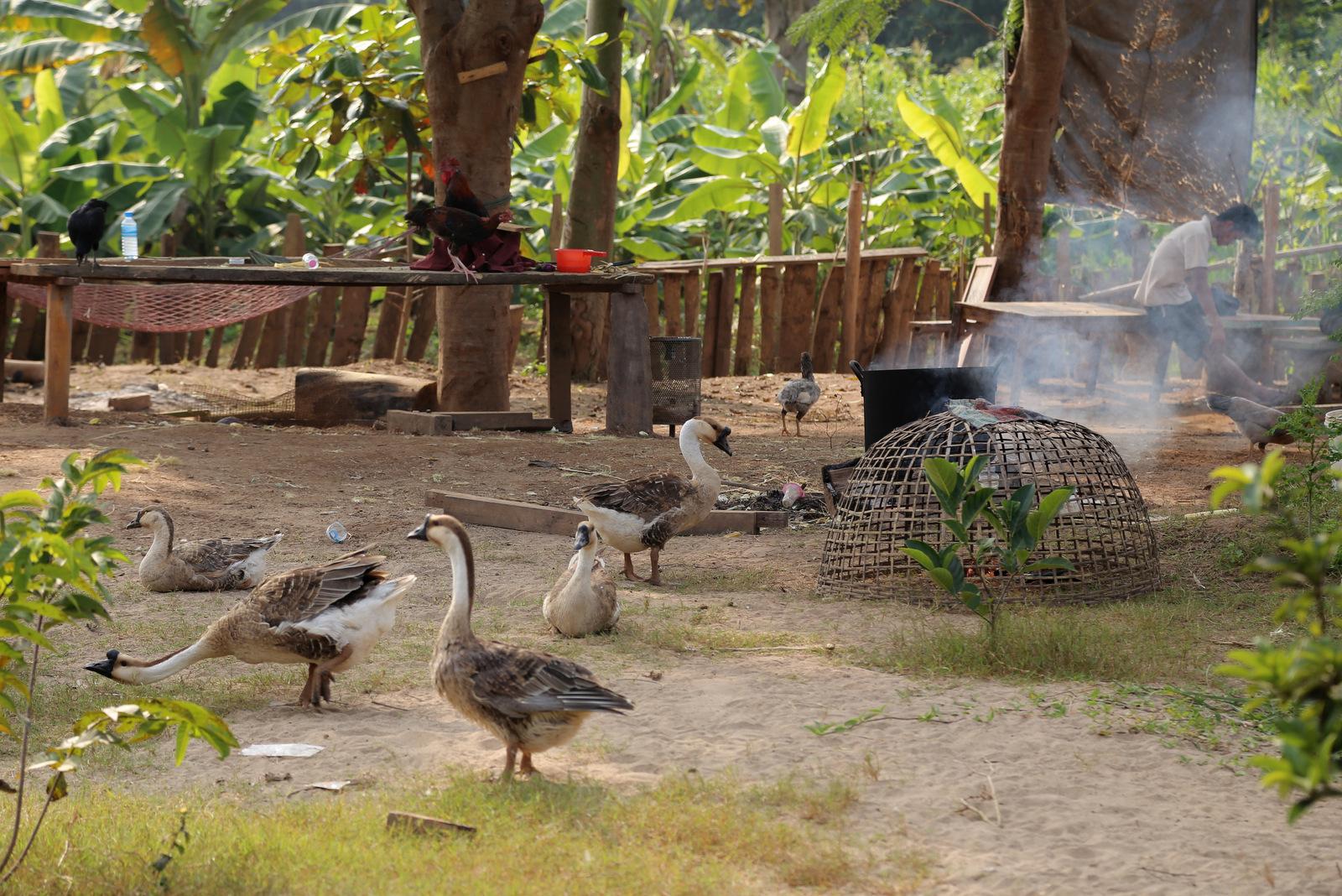 Village life near Luang Prabang