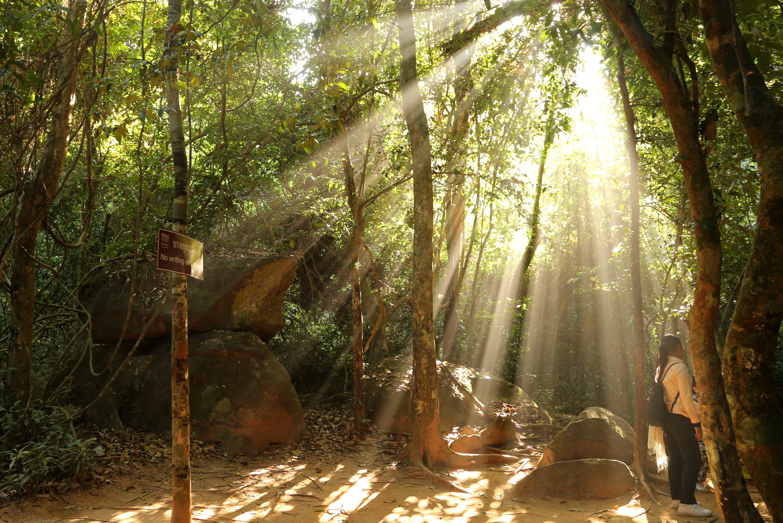 Wonderful morning light in the jungle on the way to Kbal Spean
