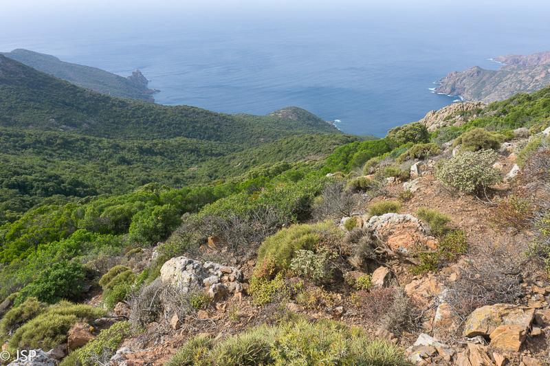 Corsica-80