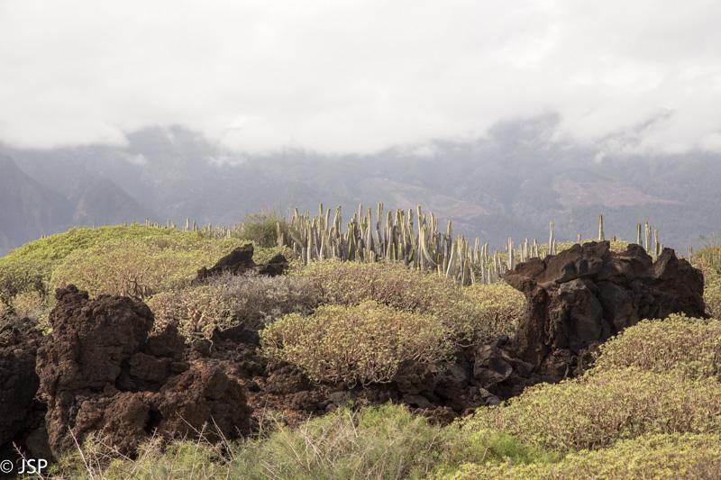 Tenerife-190