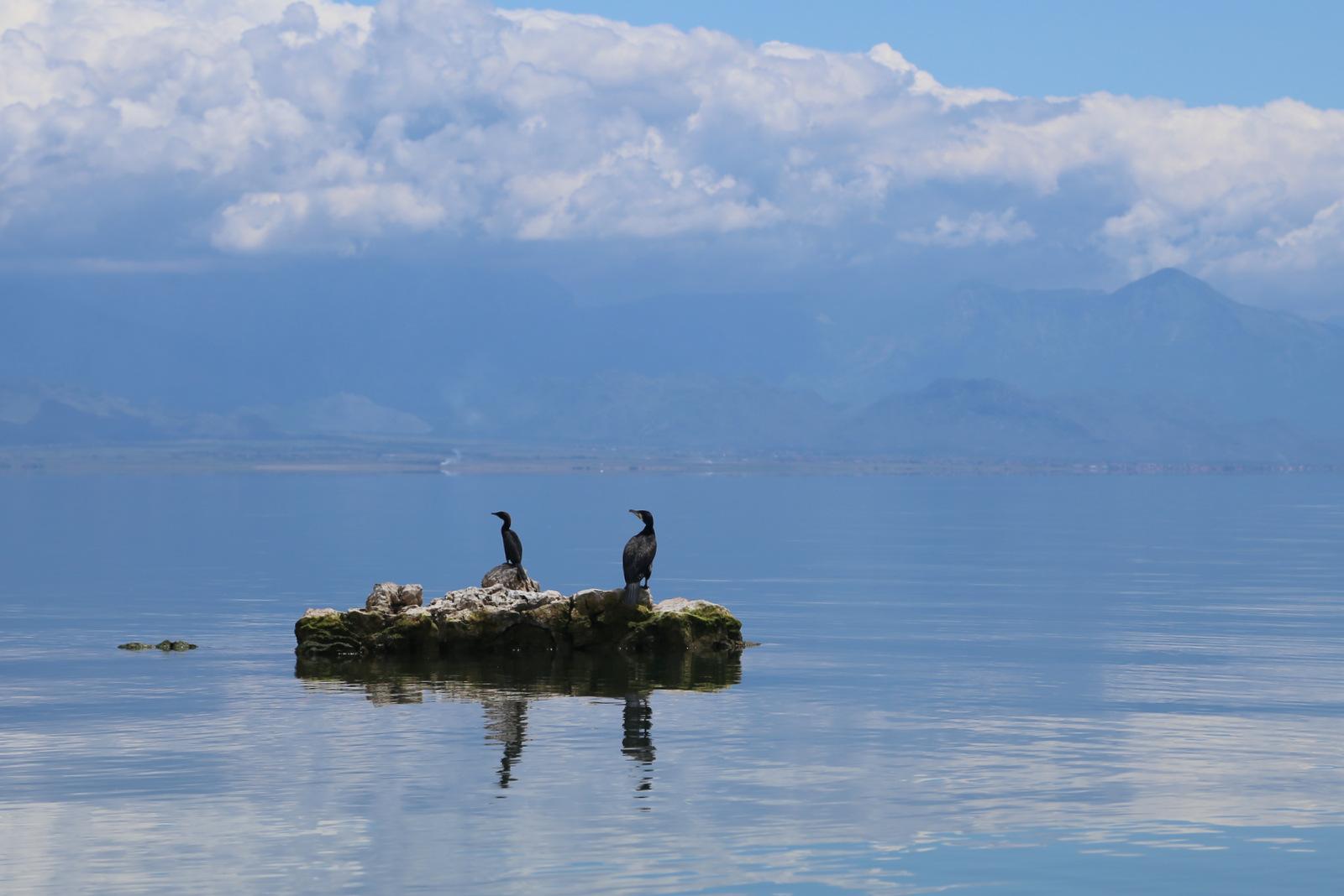 Boat tour on Skadar lake