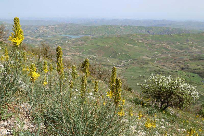Sicily-84