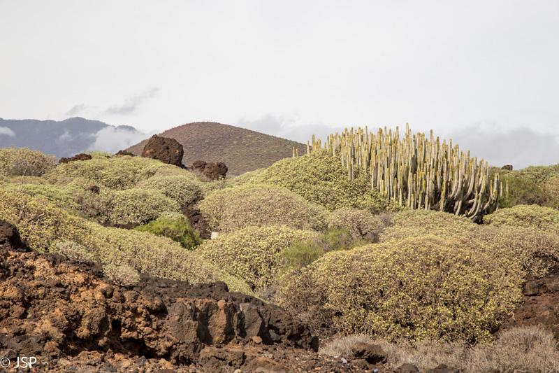 Tenerife-189